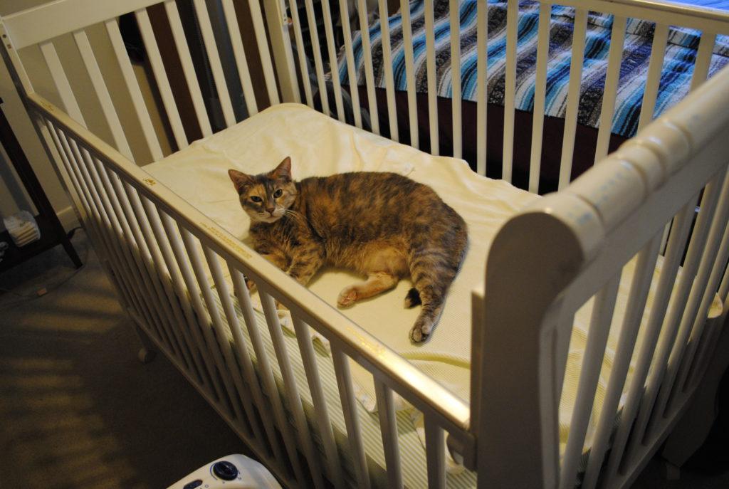 chat et arrivée bébé