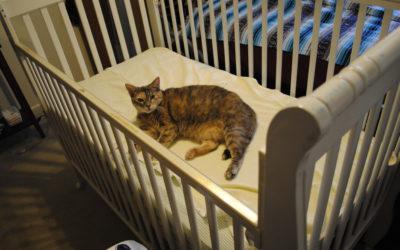 Le chat et l'arrivée d'un bébé : ce qu'il faut anticiper